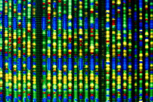 Q&A: Genome Pioneer Craig Venter Plans Largest Human Genome Project to Aid Longevity