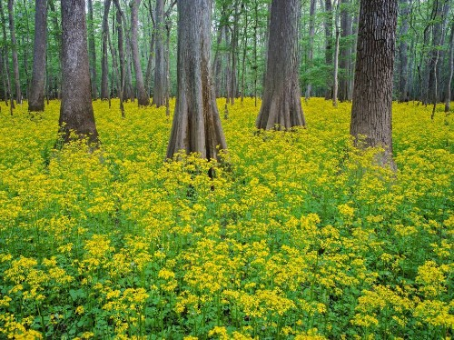 See the Largest Expanse of Old-Growth Hardwoods in the U.S.