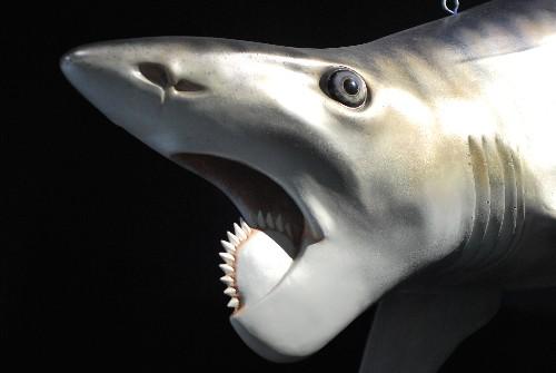 New Exhibit Explores Idaho's Buzzsaw Jaws