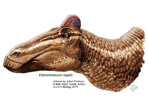 Dinosaur Fossil With Fleshy Rooster's Comb Is First of Its Kind
