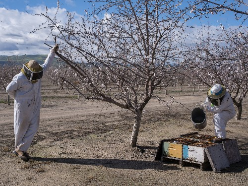 Beekeepers hit hard by thefts of hives
