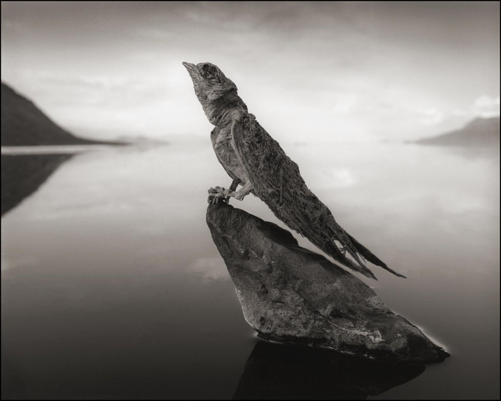 "Unusual Pictures: ""Calcified"" Birds, Bats Found at African Lake"