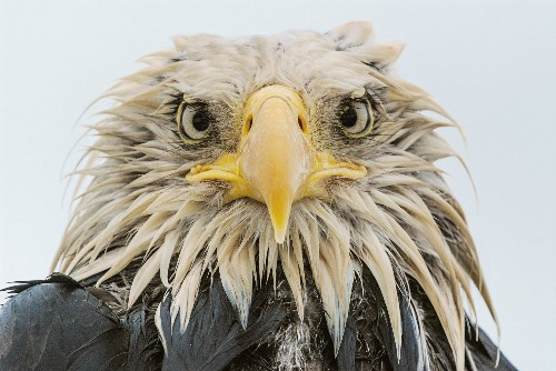 Ferocious Eagle Attack Captured in Slow Motion