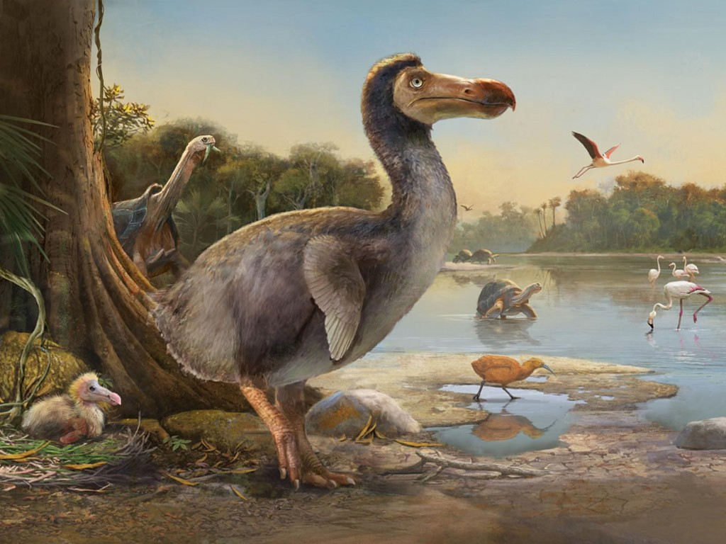 The dodo gets a makeover