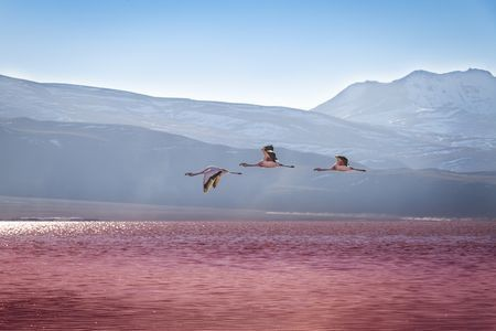 'The Beauty of Birds' Story and Pictures -- National Geographic Your Shot