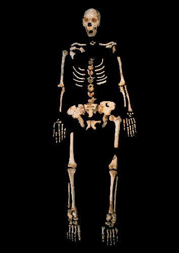 Discovery of Oldest DNA Scrambles Human Origins Picture