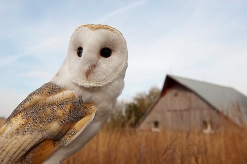 New Family Tree Illuminates 'Big Bang' in Bird Evolution After Dinosaur Extinction