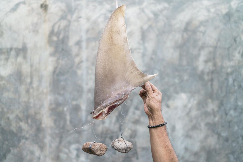 Why cracking down on the shark fin trade may be easier than we thought