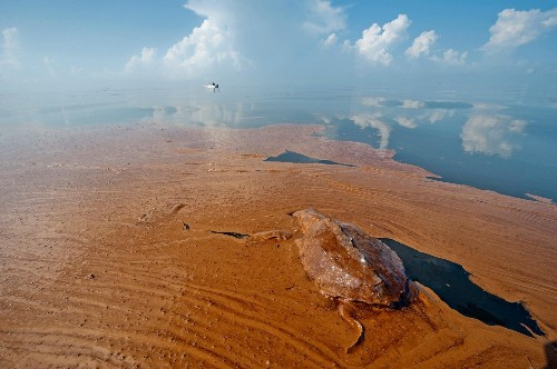 """Gulf Oil Spill """"Not Over"""": Dolphins, Turtles Dying in Record Numbers"""