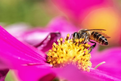 Busy Busy.... Photo by Jensen Chua — National Geographic Your Shot