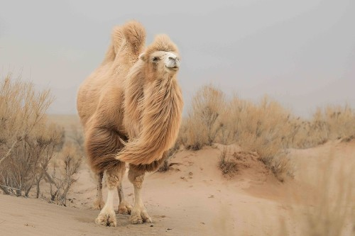 The wind is blowing on Gobi Photo by Atsuko Kawaguchi — National Geographic Your Shot