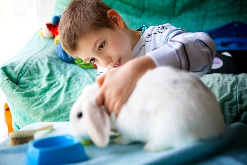 Autism's Gut-Brain Connection