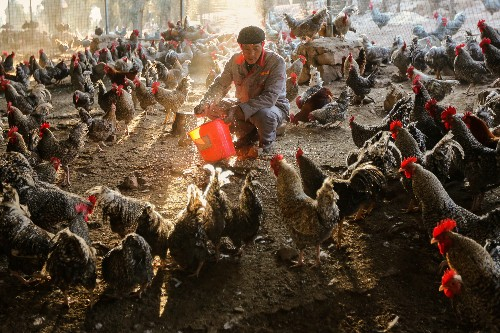 New Gene Map of Deadly Bird Flu Points to Pandemic Concerns