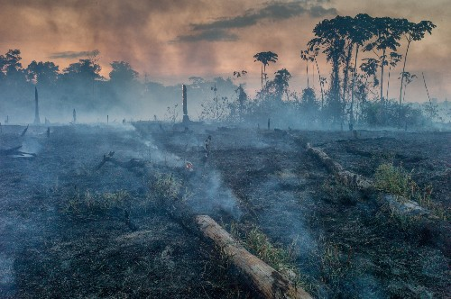 As the Amazon burns, cattle ranchers are blamed. But it's complicated.
