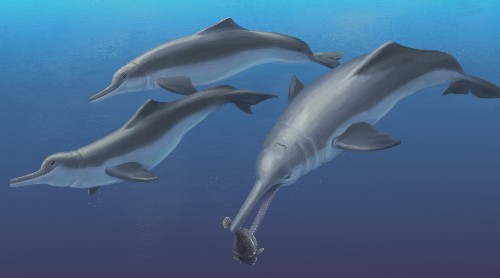 "Fossil ""River Dolphin"" Lived Out at Sea"