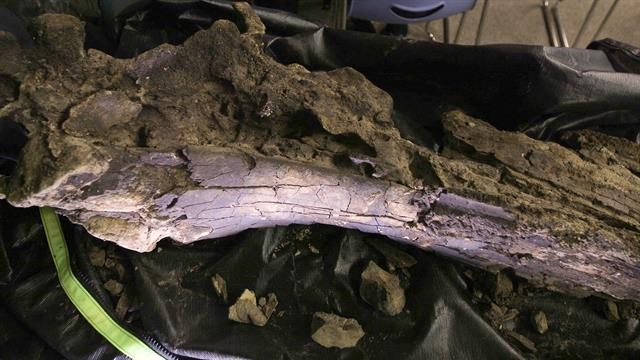 See the Ancient Whale Skull Recovered From a Virginia Swamp
