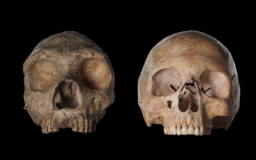 Much Earlier Split for Neanderthals, Humans?