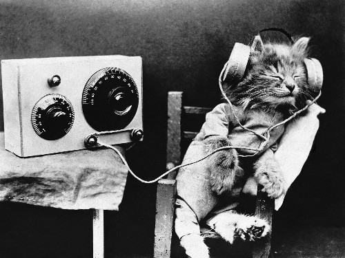 Listen: Why Scientists Have Created Music Just for Cats