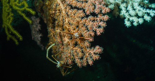 Exclusive photos show deep-sea canyon in U.S. waters teeming with life