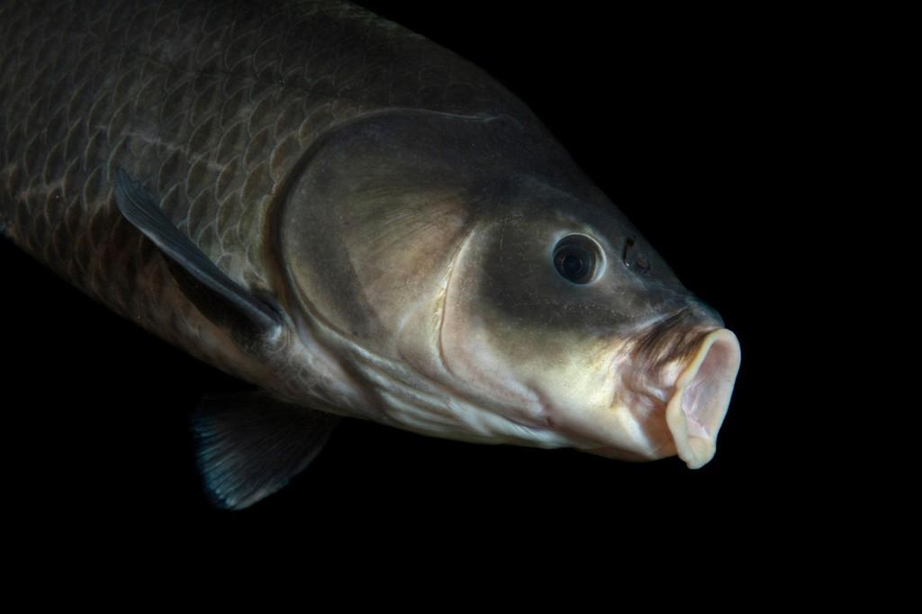 112-year-old fish has broken a longevity record