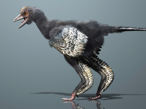 New Candidate for World's First Bird