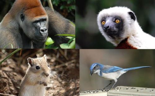 This is How You Study The Evolution of Animal Intelligence