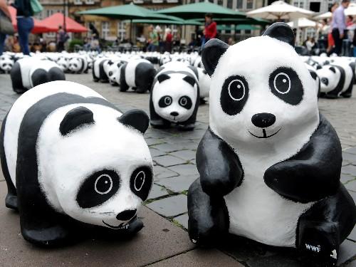 Is Breeding Pandas in Captivity Worth It?