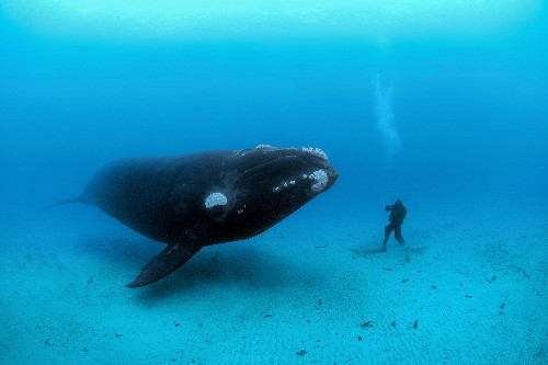 Why Do Whales Get So Big? Science May Have an Answer.