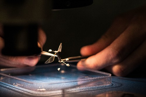 Engineer Sees Big Possibilities in Micro-robots, Including Programmable Bees