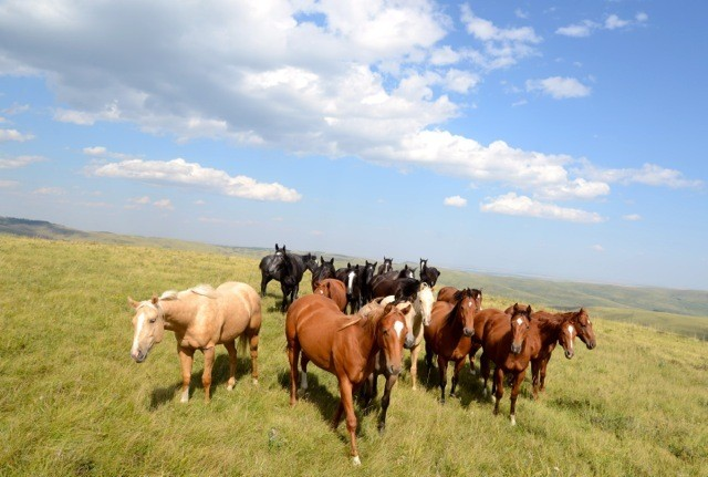 The Alberta Story: Riding Horses at Lucasia Ranch