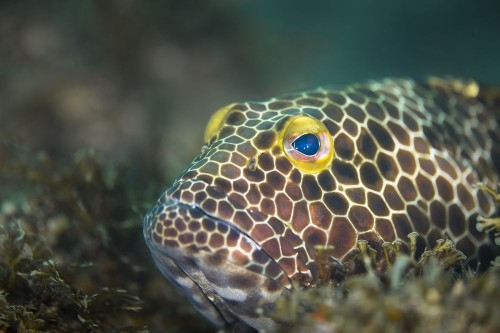 Snubnose grouper Photo by Vincent POMMEYROL - 2018 National Geographic Photo Contest