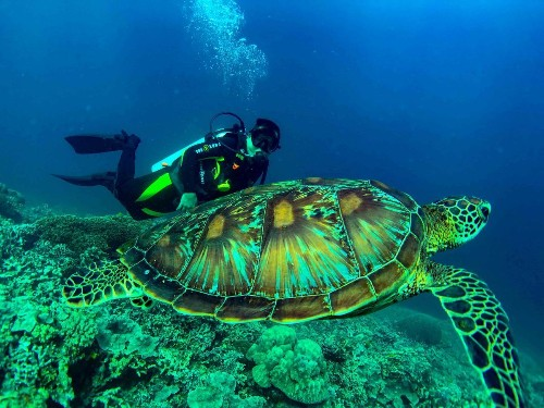 GREEN SEA TURTLE Photo by Austin Rex Lobaton — National Geographic Your Shot