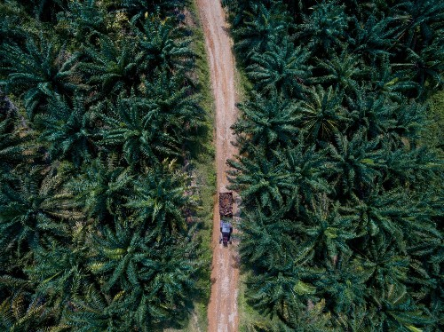 Palm oil is unavoidable. Can it be sustainable?