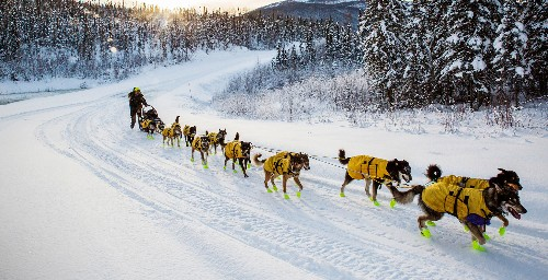 Capturing the Yukon Quest in -50°, Sourtoe Cocktail in Hand