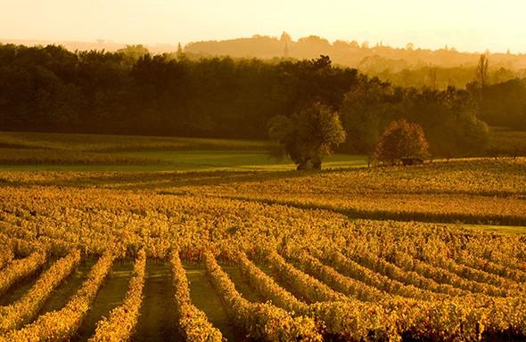 Wine For All Seasons in Bordeaux
