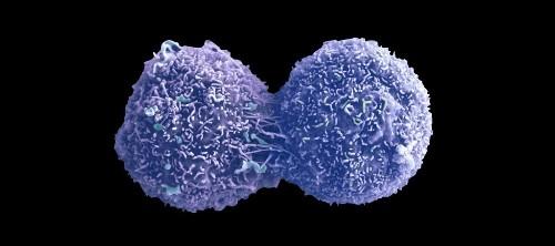 The Tumor Within A Tumor