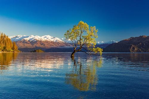 19 iconic trees around the world