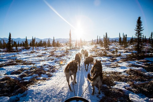 Sled Dogs Have Been Pulling Us for Millennia, Archaeology Shows