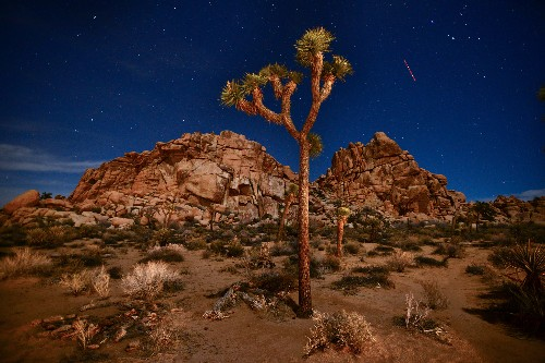 Everything to know about Joshua Tree National Park