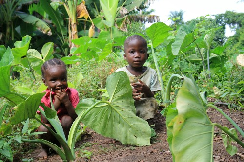 How Africans Are Saving Their Own Soil