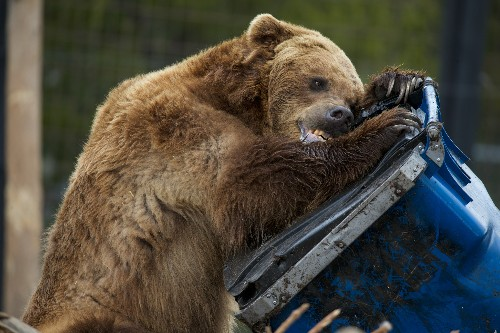 Why feeding bears is worse than you might think