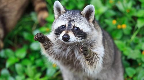 Make your backyard wildlife friendly