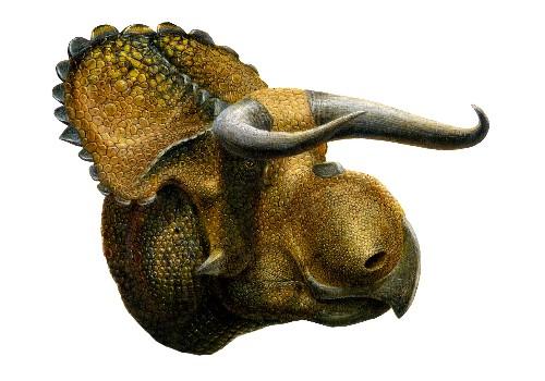 New Big-Nosed Horned Dinosaur Found in Utah