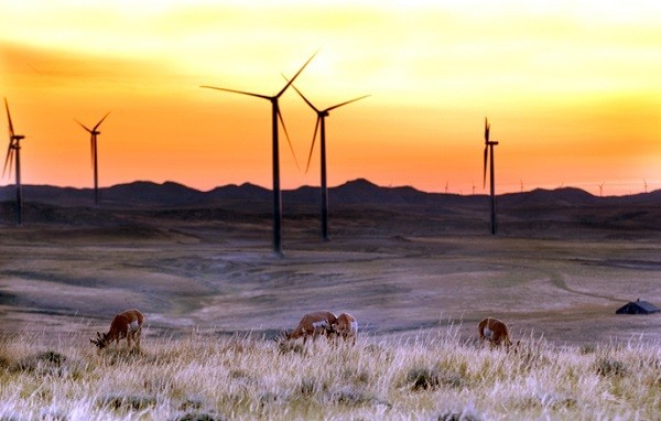 Wind Turbine Bird Deaths Cost Duke Energy $1 Million