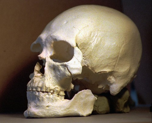Locked Away for Years, Skeleton's Secrets Rewrite Prehistory of North America