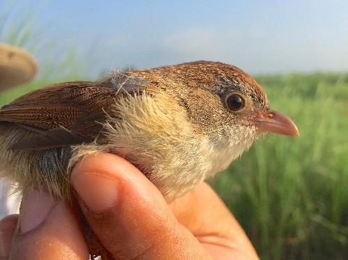 'Extinct' Bird Rediscovered in Myanmar, Surprising Scientists