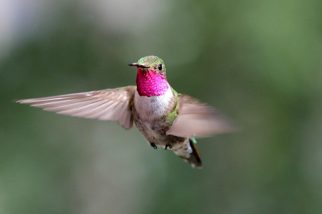 Hummingbirds see colors we can't even imagine