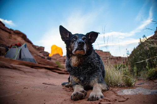 How to Hike the Backcountry With Your Dog