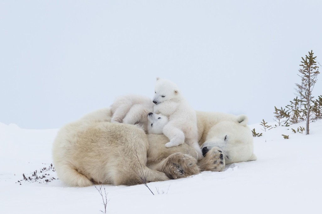 Beautiful moments between animal mothers and their babies