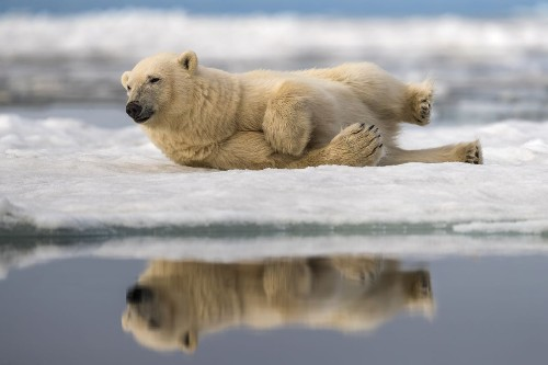 Happy Bear Photo by Jim Guerard — National Geographic Your Shot